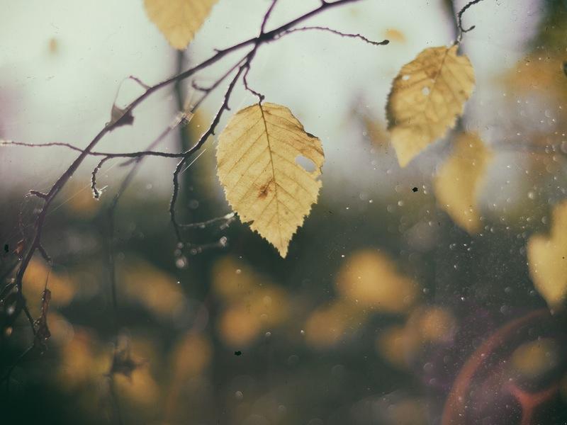 """""""Season of mists and mellow fruitfulness"""" John Keats, To Autumn"""