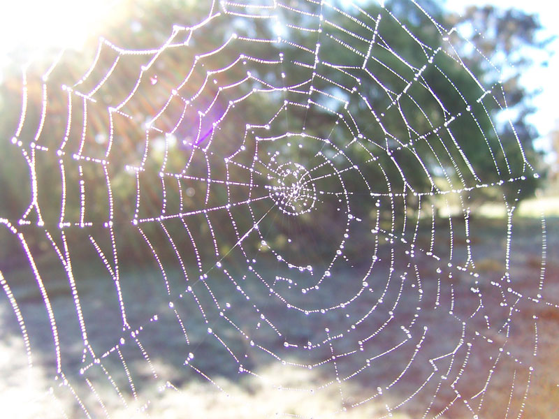 spider web shimmering with dew