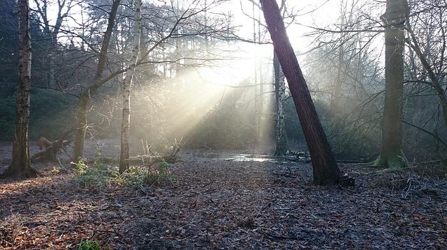 Autumn's slanted light
