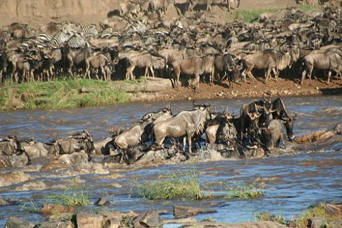 Serengeti annual migration of 100,000's of wildebeest and zebra. Photo by: Stefan Swanepoel