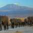 elephants-at-amboseli-national-park-against-mount-kilimanjaro-781x520-83kb