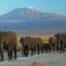 elephants-at-amboseli-national-park-against-mount-kilimanjaro-781x520-83kb