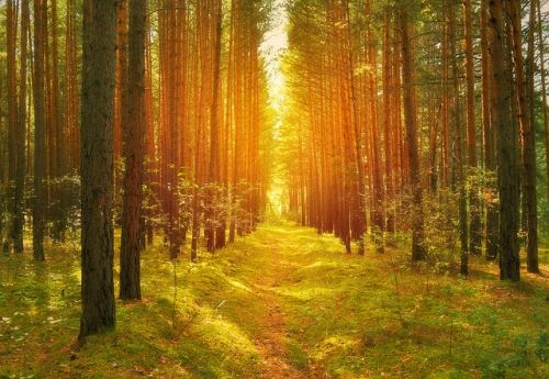guiding-light-in-the-forest